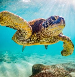 How to Protect Your Network Against the 'Sea Turtle' DNS Hijacking Campaign